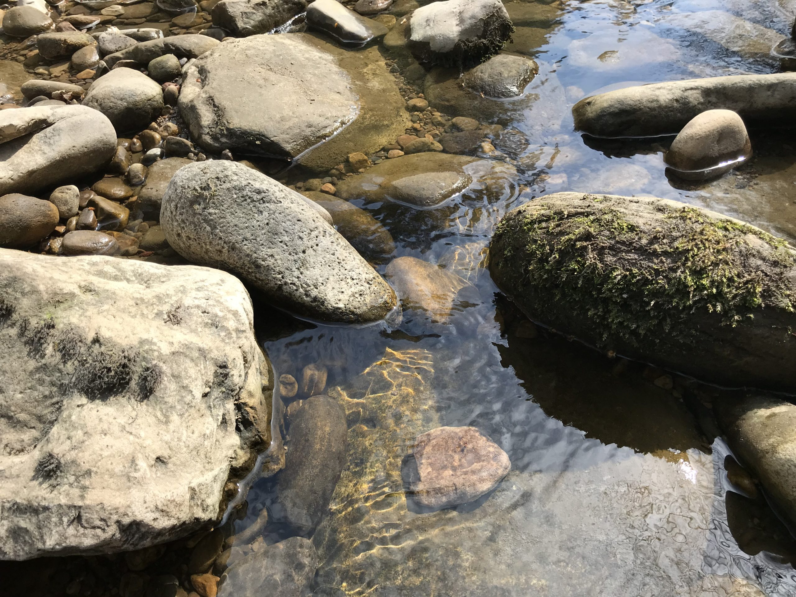 Pebbles and rocks in water